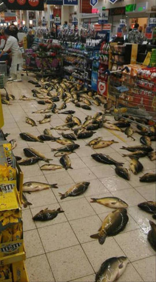 생선으로 뒤덮인 마트