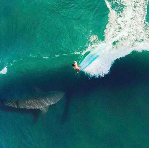 서퍼 앞에 출몰한 상어