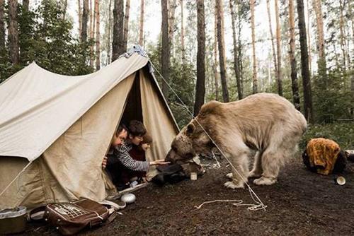 텐트 앞에 출몰한 야생곰