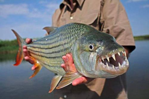 남아프리카 호수에서 잡힌 괴물 물고기