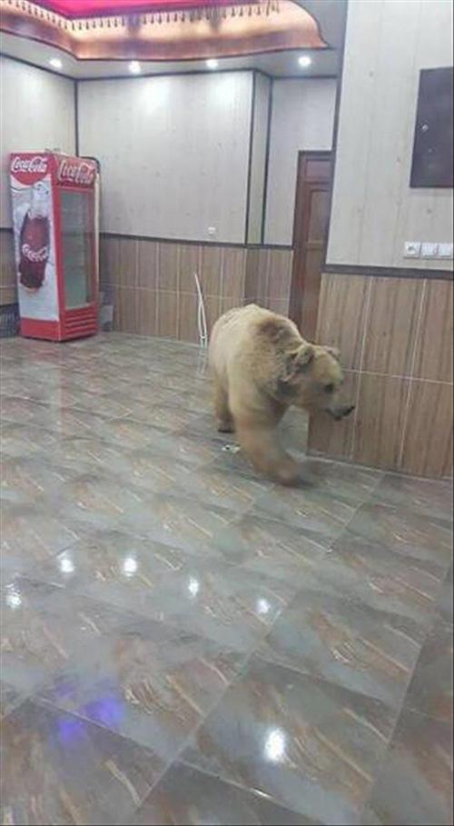 건물 내부에 출몰한 곰