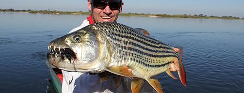 잠비아에서 잡힌 호랑이 물고기