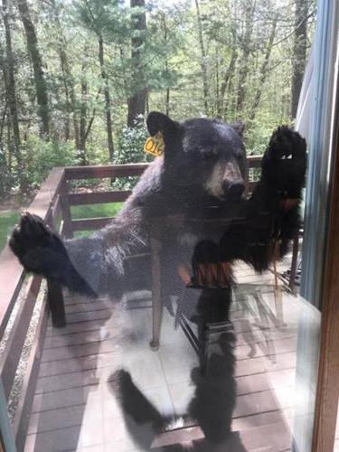 집 안으로 들어오려는 곰