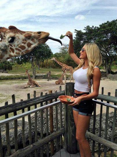 기린에게 먹이를 주는 미녀