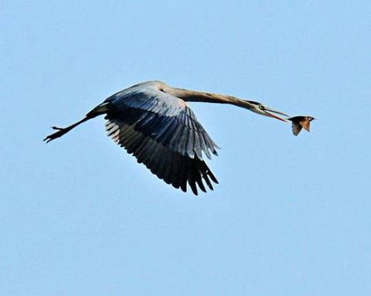 작은 새를 공격하는 거대한 새