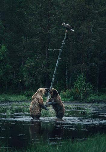 야생에서 벌어진 곰들의 결투