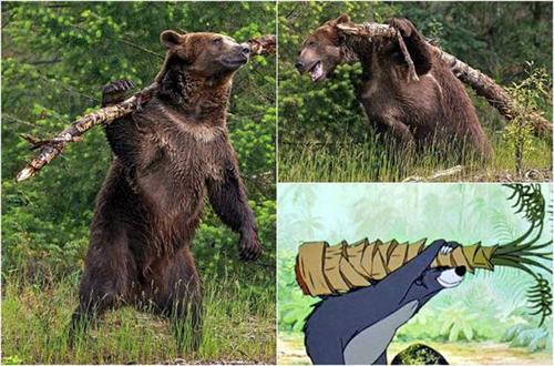 사람처럼 나무를 짊어진 곰
