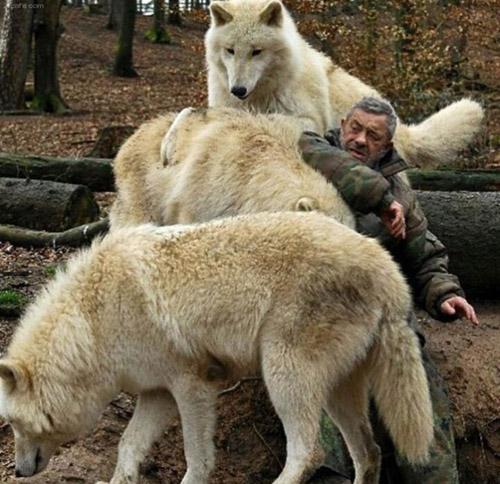 늑대의 실물 크기 '어마어마'