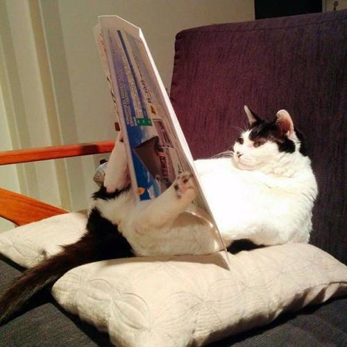 독서에 빠진 고양이