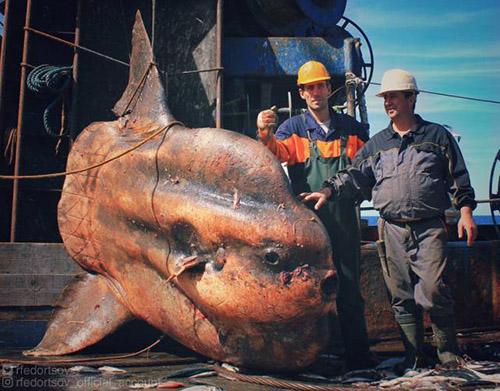 대서양에서 잡힌 괴물 물고기