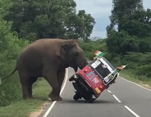 차량을 공격하는 코끼리