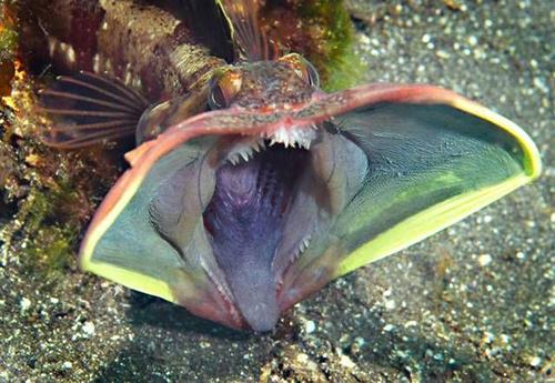 거대한 입을 가진 괴물 물고기