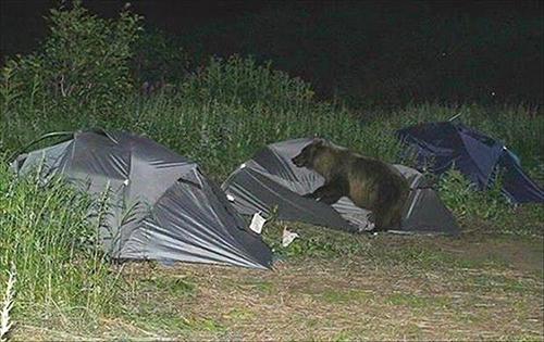 텐트를 습격한 야생곰