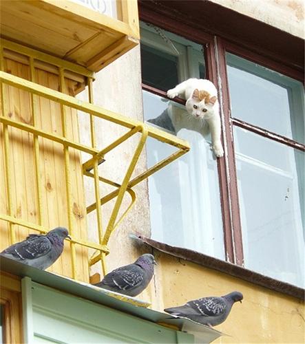 비둘기를 노리는 고양이