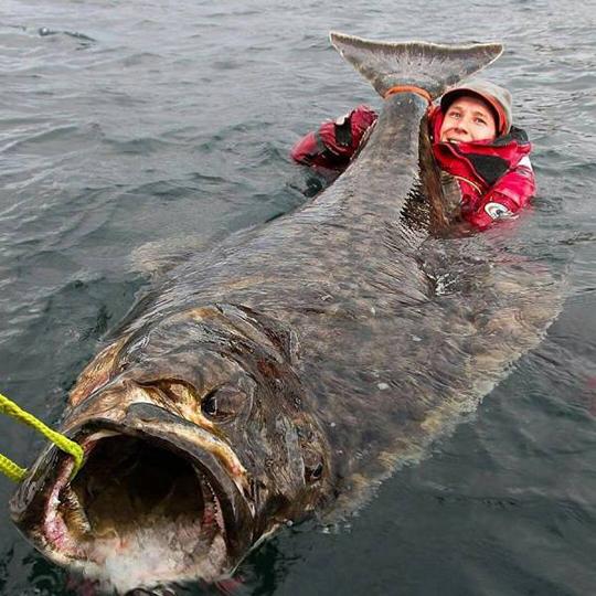 공포를 유발하는 괴물 물고기