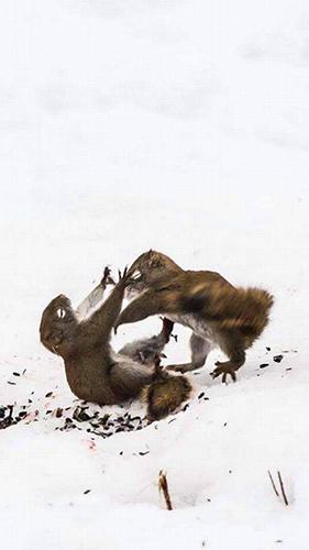 다람쥐들의 주먹다짐