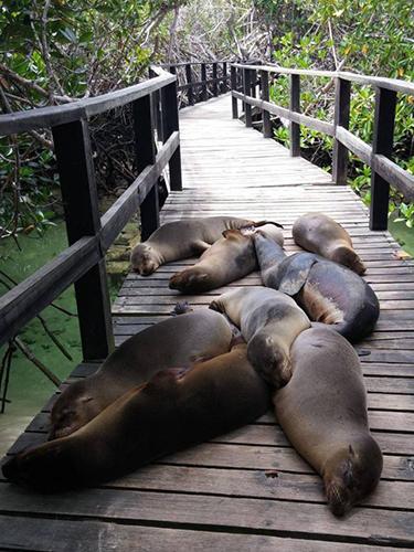 다리 위에서 잠든 바다사자 무리