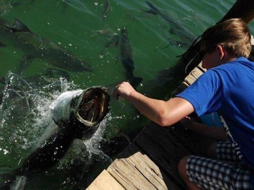 사람 향해 돌진한 공포의 물고기
