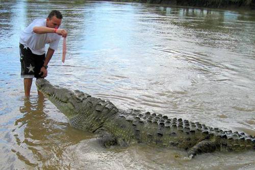 거대 악어에게 먹이를 주는 남성