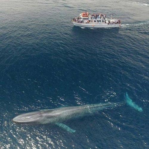흰수염고래 실물크기 '깜짝'