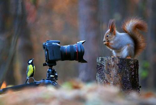 사진을 찍어주는 청설모와 새