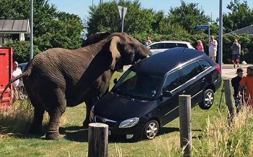 차량을 공격한 코끼리