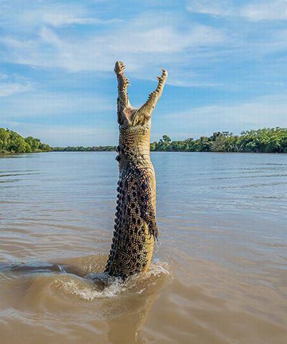 호주에서 포착된 괴물 악어