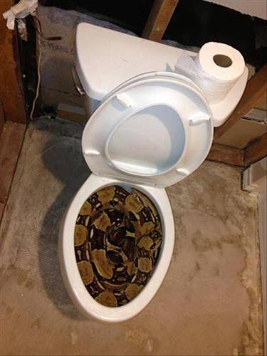 화장실에서 발견된 초대형 뱀