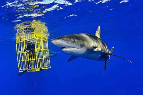 살인 상어와 마주한 잠수부