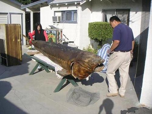 중국에서 발견된 괴물 물고기