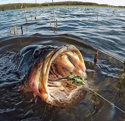 입을 벌린 괴물 물고기