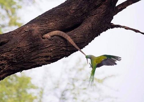 도마뱀을 공격하는 새