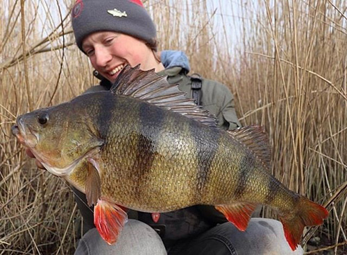 네덜란드에서 잡힌 초대형 물고기