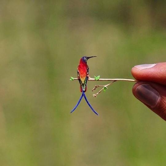 곤충 보다 작은 벌새 실물크기