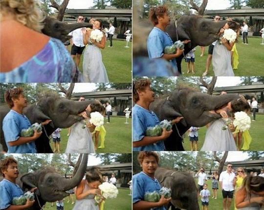 신부를 공격한 코끼리