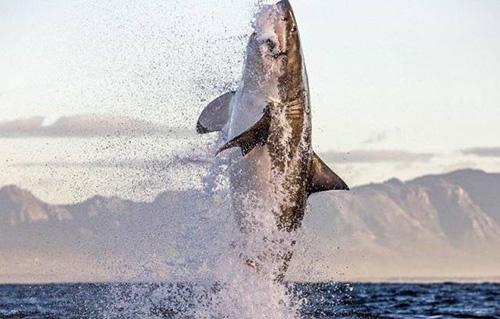 거대 상어의 점프력