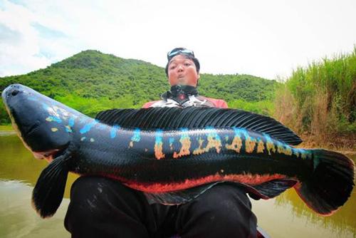 태국 낚시꾼이 잡은 괴물 물고기