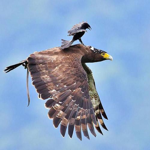 독수리에 올라탄 새