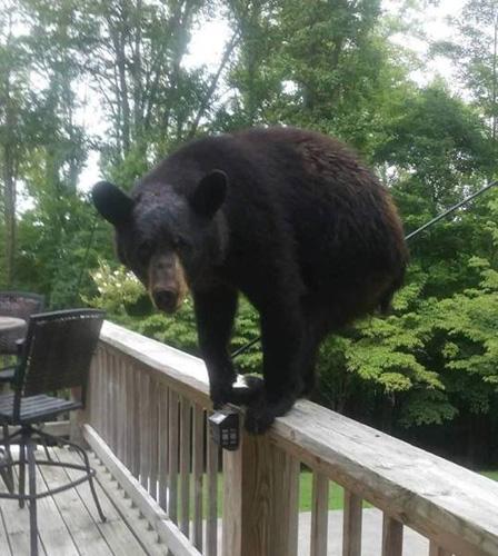 난간 위에 올라선 곰