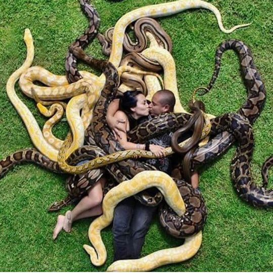 거대 뱀들에 둘러 쌓인 커플