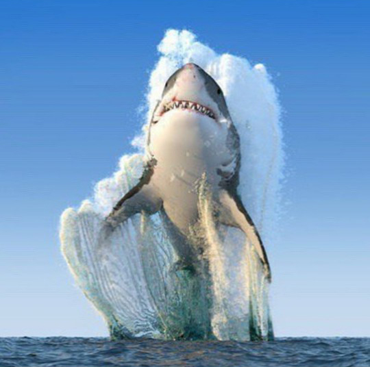바다 위로 높이 솟구친 상어