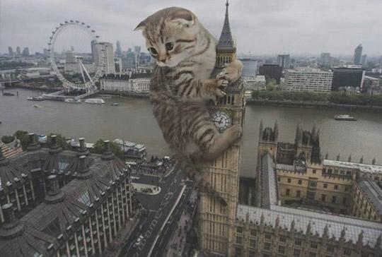 도시를 점령한 괴물 고양이