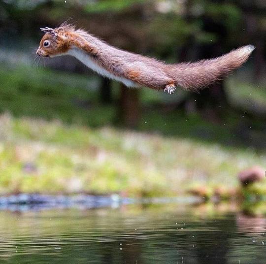 물 위를 나는 하늘다람쥐