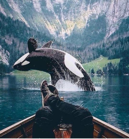환상적인 덤블링 선보인 범고래
