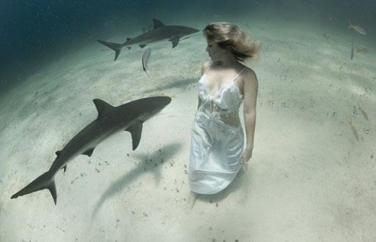 상어 옆에서 물 속 걷는 미녀