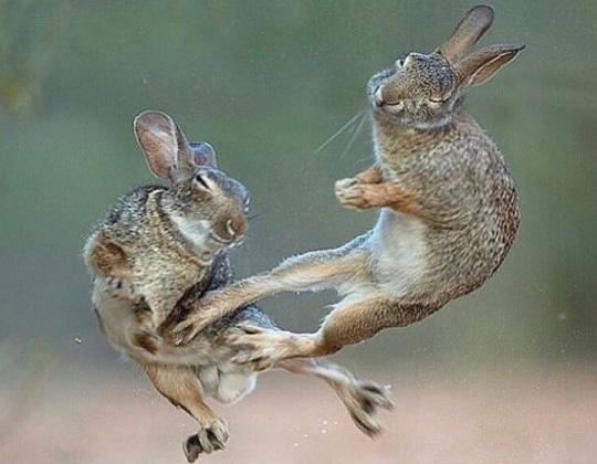 이단옆차기 선보인 태권도 토끼