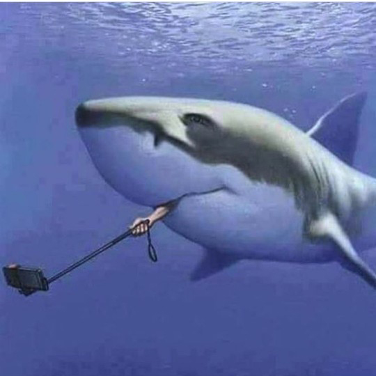 셀카를 찍으려는 거대 상어