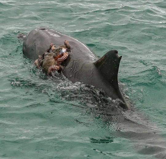 고래 등에 올라탄 괴물 문어