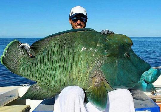 괴물 물고기 낚시 성공한 남자