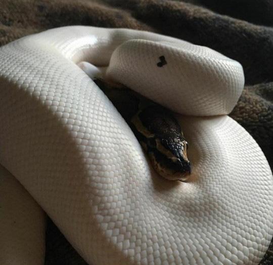 하트 모양이 새겨진 뱀
